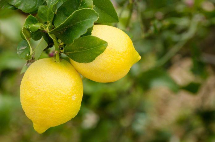 dieta del limone per perdere peso